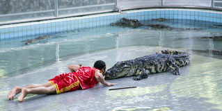 Traditional for Thailand Show of crocodiles Stock Photography