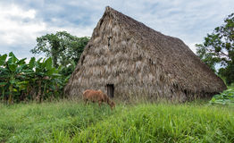 Traditional Tobacco House in Pinar del Rio,Cuba Royalty Free Stock Images