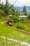 Traditional Toraja village in idyllic rural landscape Royalty Free Stock Photo