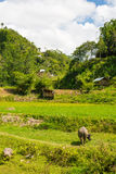 Traditional Toraja village in idyllic rural landscape Royalty Free Stock Photos