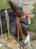 Traditional transportaion on Crete, black donkey works as taxi for tourists royalty free stock images
