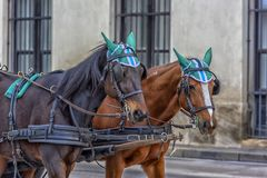 Traditional travel on a trip with horse carriage ride in the center of Vienna. Austria, Vienna 30,12,2017 Traditional travel on a trip with horse carriage ride stock photo