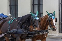 Traditional travel on a trip with horse carriage ride in the center of Vienna. Austria, Vienna 30,12,2017 Traditional travel on a trip with horse carriage ride stock images