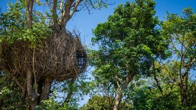 A traditional tree house natural made from natural resources tree roots or rotan in tropical green island. In bukit cinta karimun jawa indonesia stock image