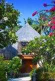 Traditional tropical hut in  garden Royalty Free Stock Images