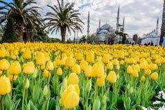 Traditional tulip festival in sultanahmet square