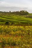 Traditional Tuscan lovely views. This picture was taken in the evening in the area of ​​the Orcia Valley. Near the town of Montenero. (Val d Orcia Royalty Free Stock Images