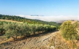 Traditional Tuscany landscape Stock Photo
