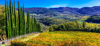 Traditional Tuscany - scenery with autumn vineyards and cypresse Stock Images