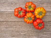 Traditional variety of Italian tomatoes Stock Image