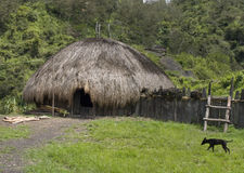 A traditional village in Papua royalty free stock images