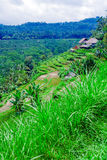 Traditional Village with Rice Field in Jungle Royalty Free Stock Image