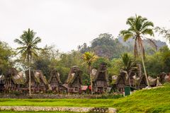 Traditional village, Tana Toraja Stock Photography