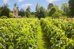 Traditional vineyard Stock Photos