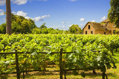 Traditional vineyard and old farm Royalty Free Stock Photos