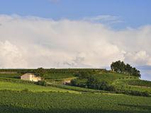 Traditional Vineyard Saint-Emilion. View from the town of Saint-Emilion France - Looking across the fields to a traditional French Vineyard and small farmhouse royalty free stock photos
