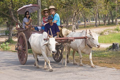 Traditional wagon ride pulled by oxen Stock Image