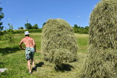 Traditional way of hay stocked in the village Royalty Free Stock Images
