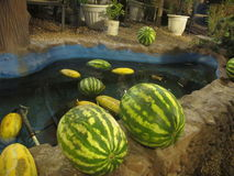 Traditional way of keeping watermelons cool, Tehran Royalty Free Stock Photo