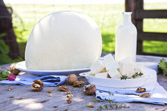Traditional white cheese. Stock Image