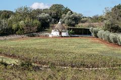 White washed conical roofed building in a field on a farm in the area of Cisternino / Alberobello in Puglia Italy. Traditional white washed conical roofed stock photography