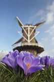 Traditional windmill with spring crocus in front Royalty Free Stock Image