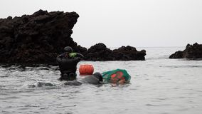 Traditional Women-Divers at Jeju Island, also Called as Haenyeo, Gathering Shell-fish in the Sea. Shot with a Sony RX10 IV fps59,94 FHD stock video footage
