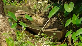 Traditional wooden boat. Hidden in the jungle of Mekong delta stock video footage