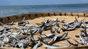 Traditional Yunan Dried Fish stock footage