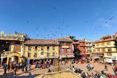 Traditionali house and Pigeon  in Kathmandu,nepal Royalty Free Stock Photo