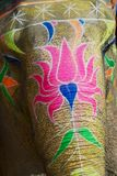 Traditionally decorated elephant head near Amber fort in Jaipur, Rajasthan, India. stock photos