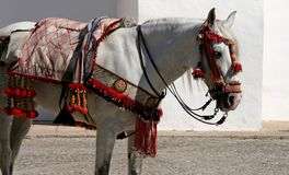 Traditionally harnessed Spanish horse in Andalusian town stock images