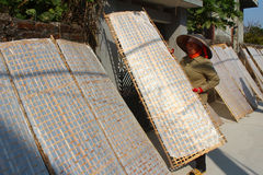Traditionally made rice paper drying in sun, Vietnam Royalty Free Stock Photos