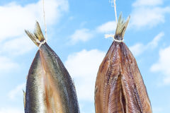 Traditionally smoked kippered herring on blue sky background Royalty Free Stock Photo