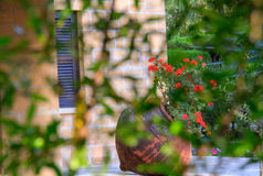 Traditioneel bloempot en venster in een traditionele huisbinnenplaats, Nicosia, Cyprus Stock Foto's