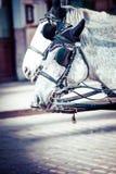 Traditioneel door paarden getrokken Fiaker-vervoer bij beroemd Hofburg-Paleis in Wenen, Oostenrijk Stock Fotografie