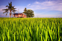 Traditioneel Huis in Paddy Field Stock Fotografie