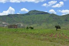 Traditioneel landbouwbedrijf en gebied in Lesotho Stock Fotografie