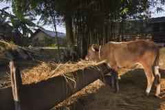 Traditioneel landbouwbedrijf in Nepal, Terai Stock Fotografie