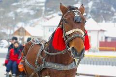 Traditioneel paardvervoer Royalty-vrije Stock Afbeeldingen