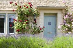 Traditioneel steenhuis met blauwe deuren, rode rozen, bloeiende lavendel Stock Foto's