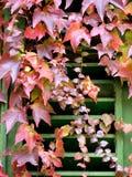 Traditioneel Toscaans venster dat met rode bladeren wordt behandeld Stock Fotografie