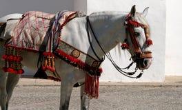 Traditioneel uitgerust Spaans paard in $ce-andalusisch stad stock afbeeldingen