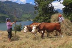Traditionel обрабатывая землю в горах chile стоковая фотография rf