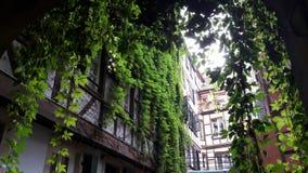 Traditionele binnenplaats met klimplanten royalty-vrije stock fotografie