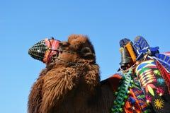 Traditionele Carnaval-aantrekkelijkheden Royalty-vrije Stock Foto's