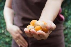 Traditionele Chinese gele minicakes op hand van bakker Stock Foto
