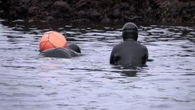 Traditionele die vrouw-duikers bij Jeju-Eiland, ook als Haenyeo wordt geroepen, die Schaaldieren in het Overzees verzamelen stock video