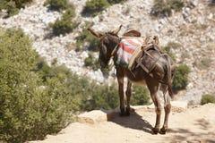 Traditionele Griekse ezel Landelijke wijze van vervoer kreta G Royalty-vrije Stock Fotografie