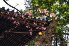 Traditionele Japanse daktegels en bloeiende sakurabloemen in S Stock Foto